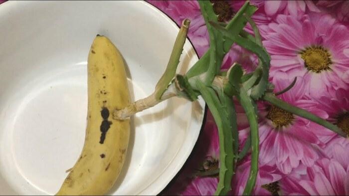 Целебное растение, которое растет будто на дрожжах, благодаря небольшому дополнению. /Фото: i.ytimg.com