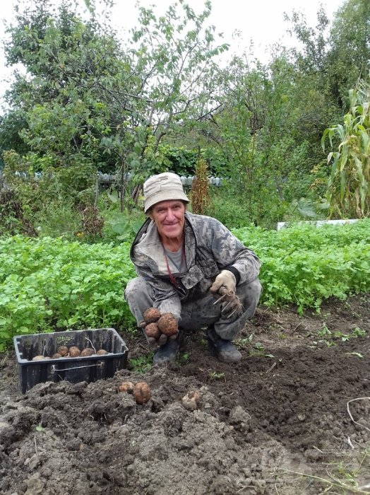 Урожай может быть лучше. /Фото: khabarovsk.md