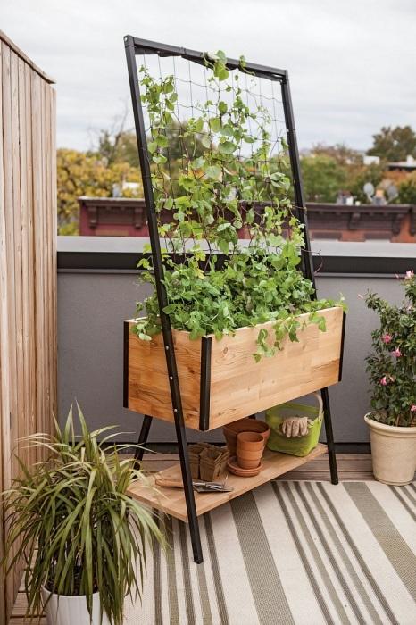В такой конструкции удобно растить виноград или любые вьющиеся растения. /Фото: decoor.net