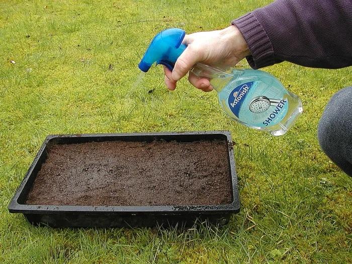 После посева землю опрыскивают из пульверизатора, чтобы под струей воды семена не ушли глубже в грунт. /Фото: images.saymedia-content.com