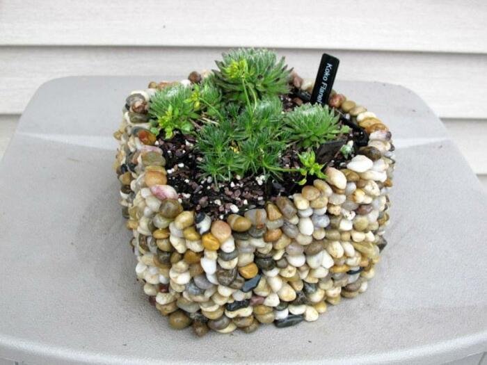 Суккуленты отлично сочетаются с камнями. /Фото: garden.org