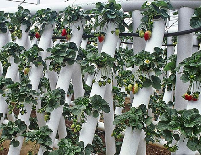 Трубы ПВХ можно скреплять между собой или закреплять на специальные опоры. /Фото: agrarii.com