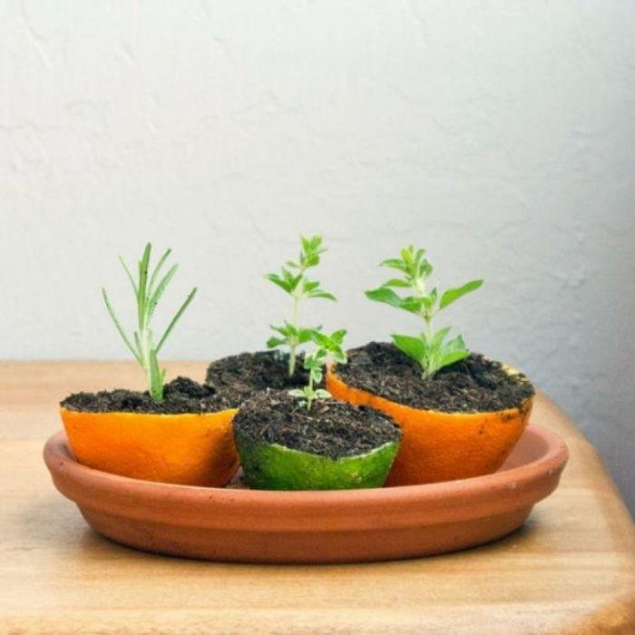 Кожура цитрусовых отлично подходит для выращивания растений. /Фото: trendomat.com