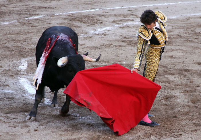 Может, на самом деле быка просто раздражает матадор? /Фото: upload.wikimedia.org