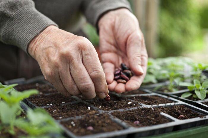 Семена сильно не заглубляют, но и мелко тоже не сажают. /Фото: fthmb.tqn.com