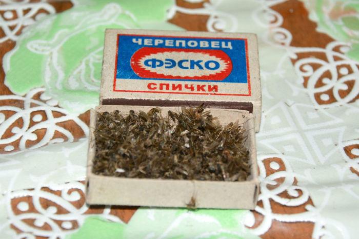 Самый невероятный миф СССР, на котором пытались разбогатеть советские люди. /Фото: ic.pics.livejournal.com
