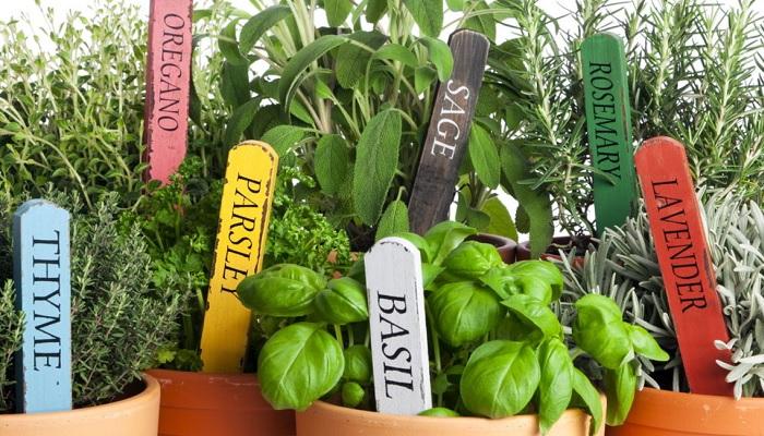 Зелень на кухне — это и польза и украшение.