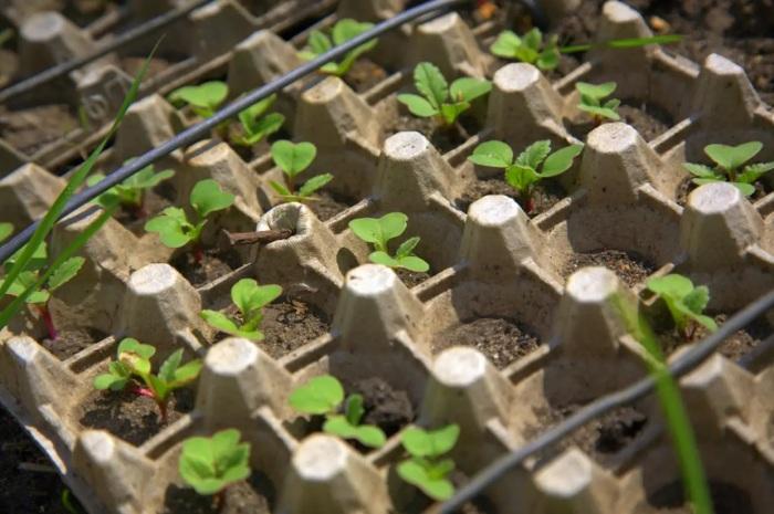 Удобное и компактное вместилище для проращивания любых семян. /Фото: r2.mt.ru