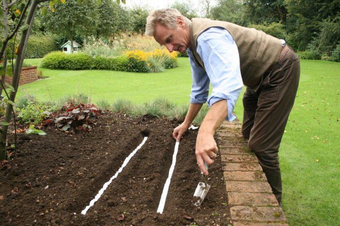 Ленточная посадка мелких семян экономит время и помогает получить ровные ряды всходов. /Фото: ngb.org