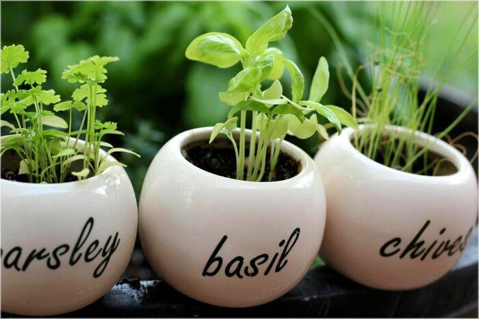 Базилик — отличный выбор для выращивания на кухне. /Фото: i.pinimg.com