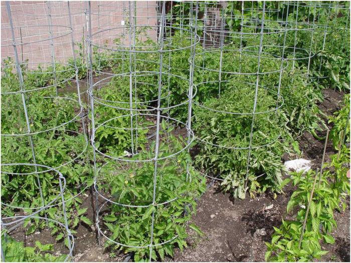 Оригинально, красиво, а главное урожая станет больше. /Фото: ogorodnik.net