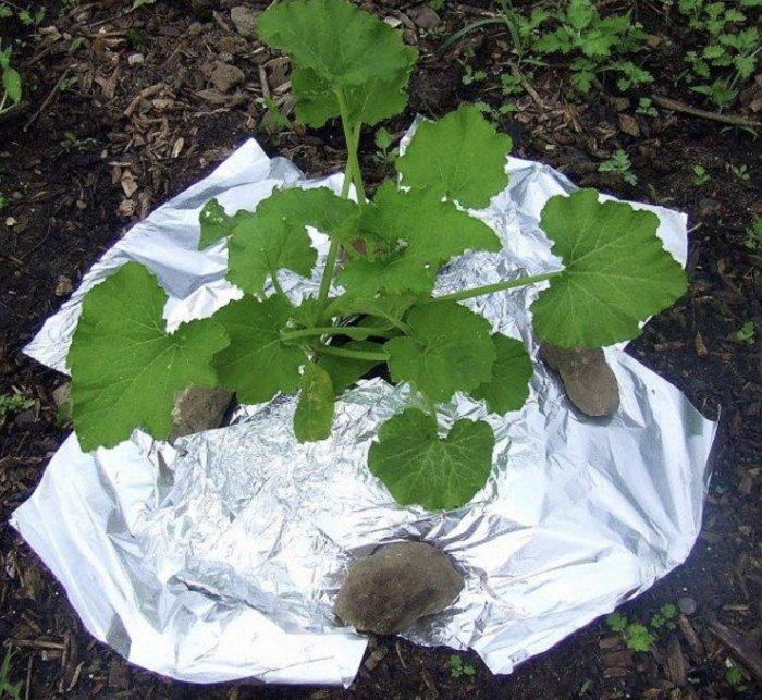 Простой способ обеспечить растению большее количество света. /Фото: cdn.amoanimals.com