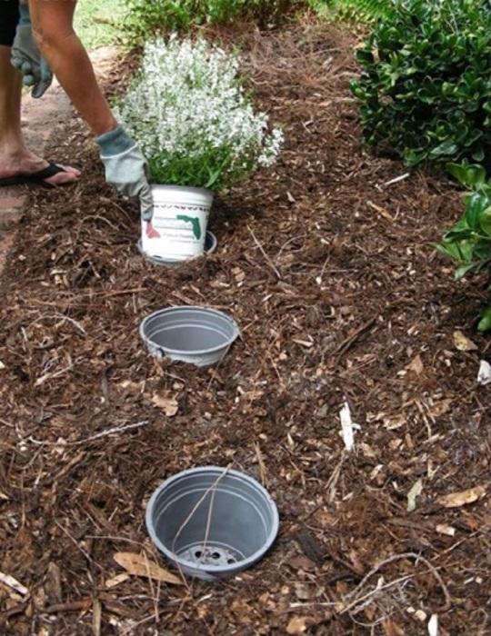 Высадка цветов на клумбе в горшки позволяет экспериментировать с размещением цветов без вреда для корней и лишних усилий по пересадке. /Фото: laidbackgardener.files.wordpress.com