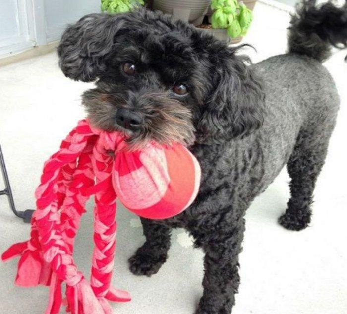Собаку такая самодельная игрушка приведет в восторг. /Фото: kot-pes.com