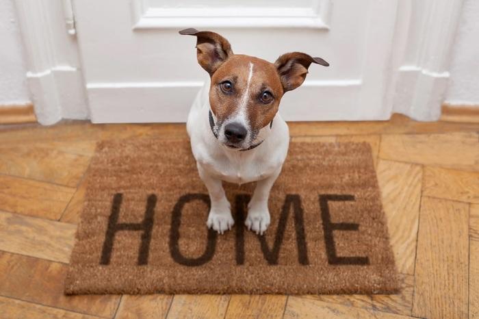 Пока дома нет людей, собака будет за старшего. /Фото: static.wixstatic.com