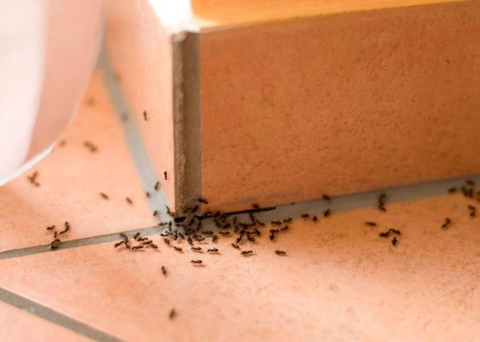 Уксус спасет от нежелательных гостей в доме. /Фото: nastroy.net