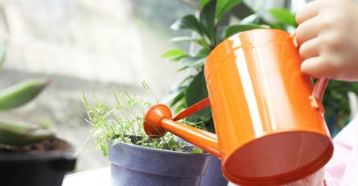 Поливать растения нужно аккуратно. /Фото: landshaftnik.com