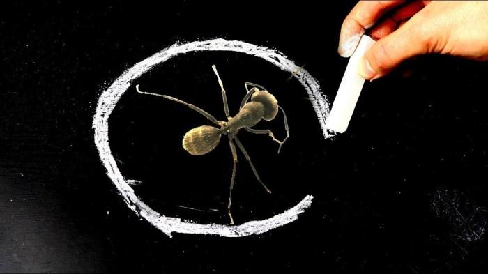 Линия из мела имеет весомое значение в жизни муравьев. /Фото: i.ytimg.com