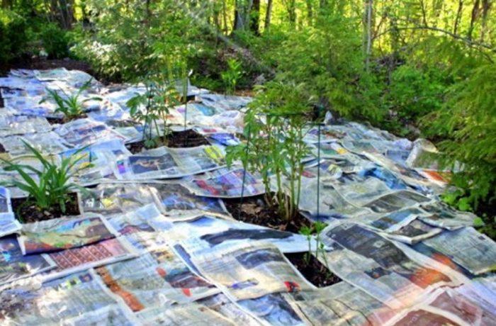 Есть несколько эффективных способов борьбы с сорняками, которые не займут много времени. /Фото: historiascomvalor.com