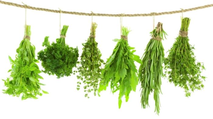 Есть способ сохранить зелень долго. /Фото: img.yandex.ru