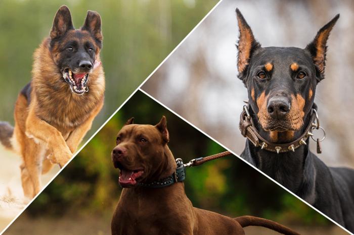Собака — верный друг и надежный защитник человека. /Фото: cdn.hiconsumption.com