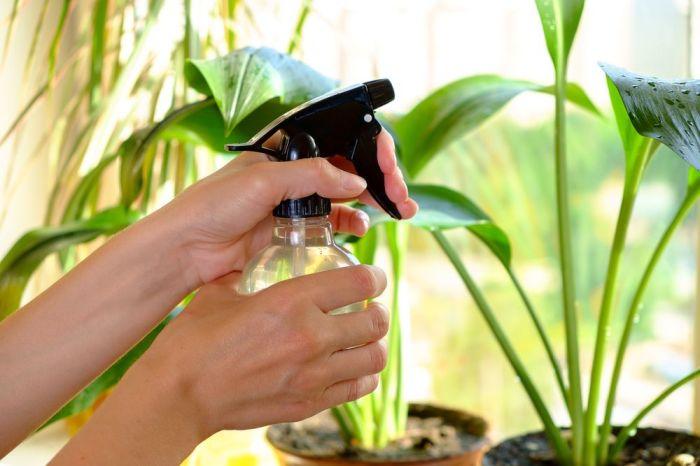 Полезный лайфхак для здорового роста комнатных растений. /Фото: agrostory.com