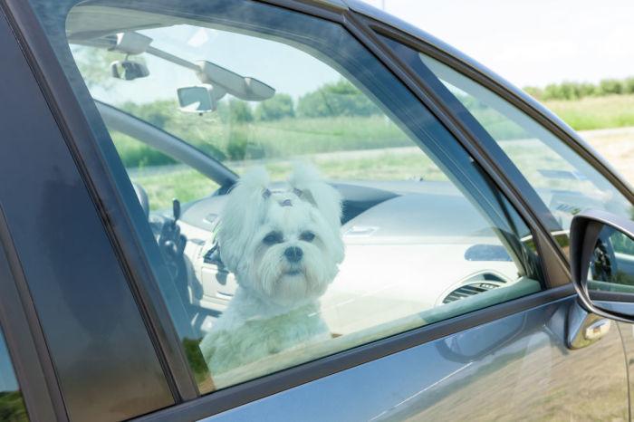 Закрытые окна помогают улучшить аэродинамику машины. /Фото: bloximages.newyork1.vip.townnews.com