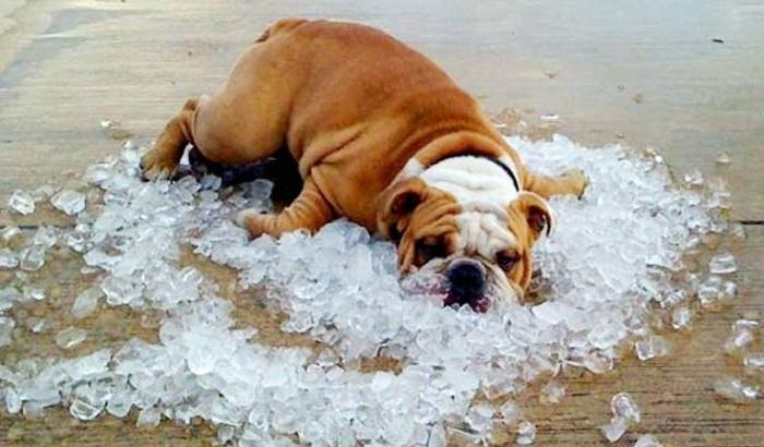 Лед — действенно, но лучше придумать что-то не такое радикальное. /Фото: a.scpr.org