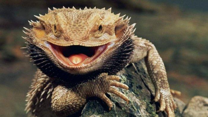 Удивительная рептилия. /Фото: animalreader.ru