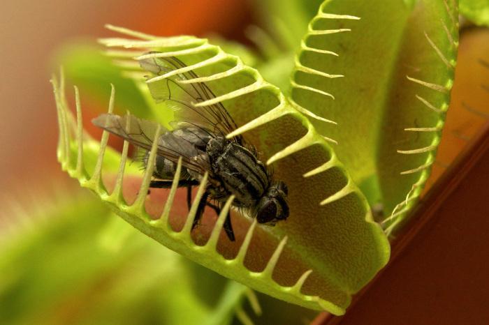 Долой надоедливых насекомых. /Фото: chinatown2.ru