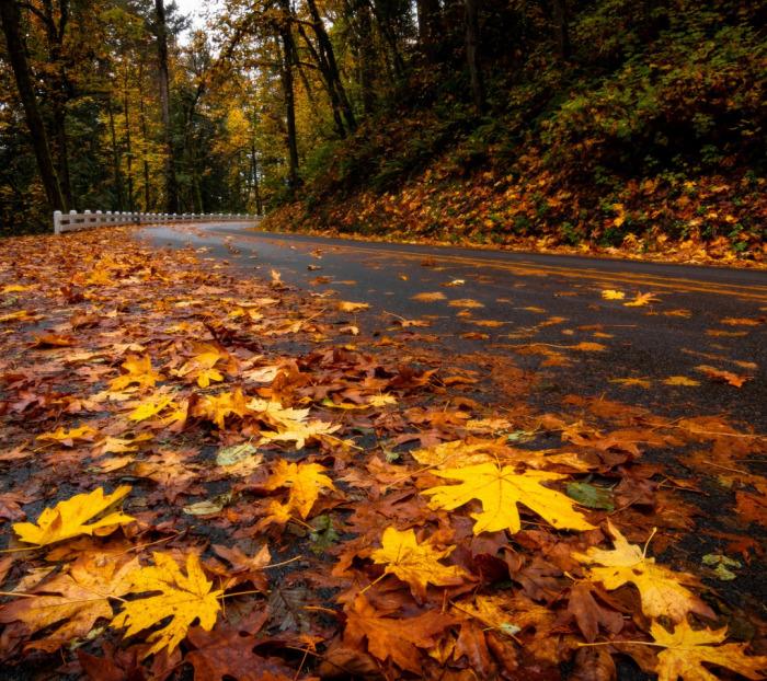 Что листья, что ледяная корка, пусть и незаметная, – жутко скользкие покрытия. |  Фото: img5.goodfon.ru