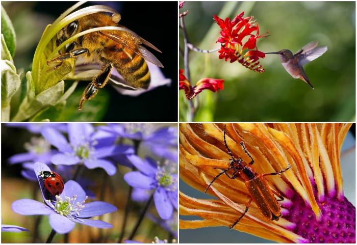 Благодаря биотическим агентам-опылителям размножается около 70% растений на планете.