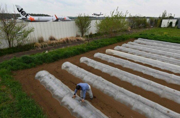 Такао Шито выращивает органические овощи посреди территории Narita international airport (Япония). | Фото: nst.com.my.