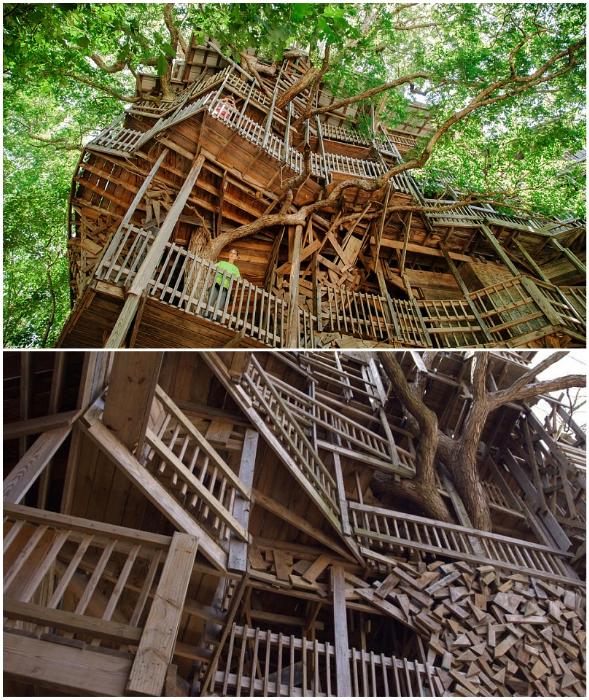 Множество переходов, террас и балконов соединяют уровни «небоскреба» на дереве.