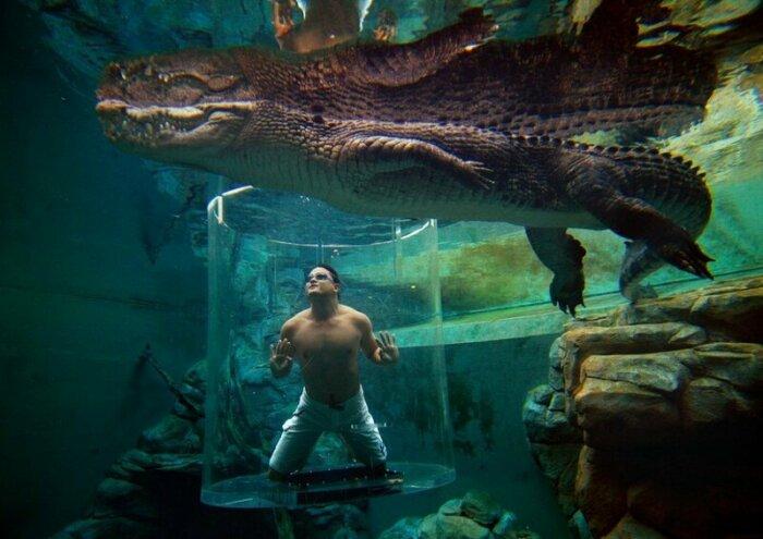 В «капсулу смерти» не каждый решится войти (Crocosaurus Cove, Австралия). | Фото: vova-91.livejournal.com.