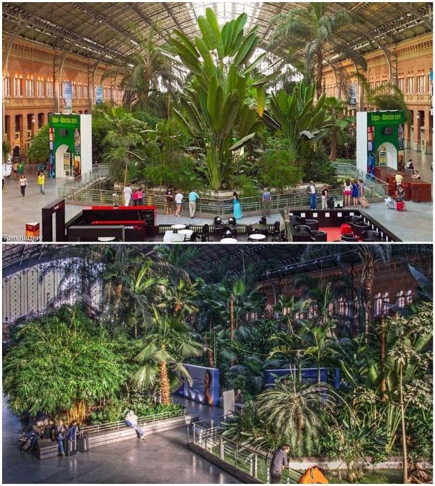 Ботанический сад на вокзале Аточа в Мадриде (Испания).