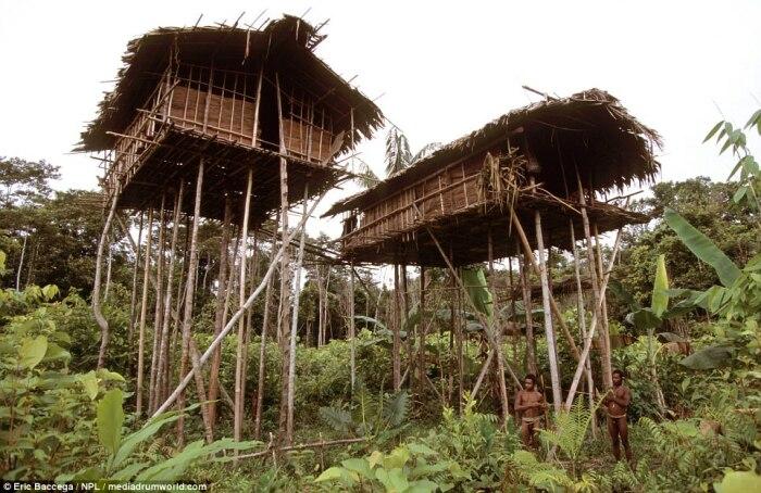 Дикое племя короваи до сих пор ходит без одежды и совсем не желает спускаться с деревьев. | Фото: masterok.livejournal.com.