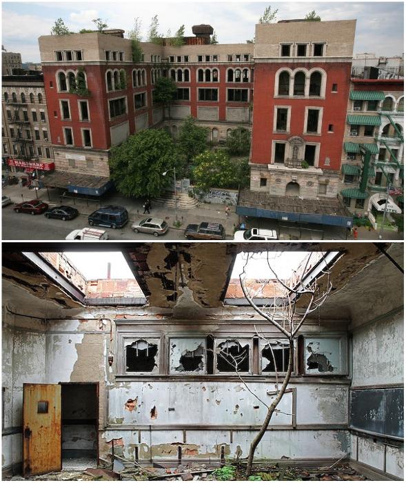 После закрытия Public school № 186 в ней растут лишь деревья (Манхеттен, США).