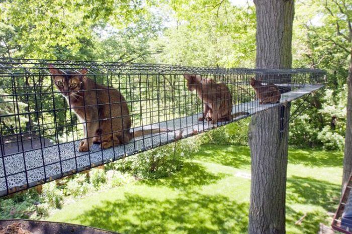 Коты не боятся высоты, поэтому воздушные «катио» сделают прогулку любимца не забываемой. | Фото: noticias.uol.com.br.