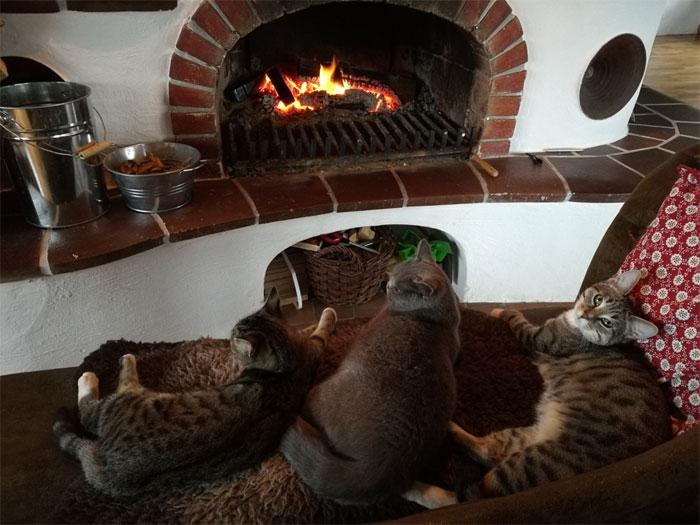 Горящие дрова в печи привлекают и завораживают даже кошек. | Фото: decorstyle.ig.com.br.