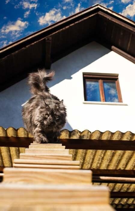 Котейка всегда найдет дорогу на улицу и домой. | Фото: lishbuna.blogspot.com.