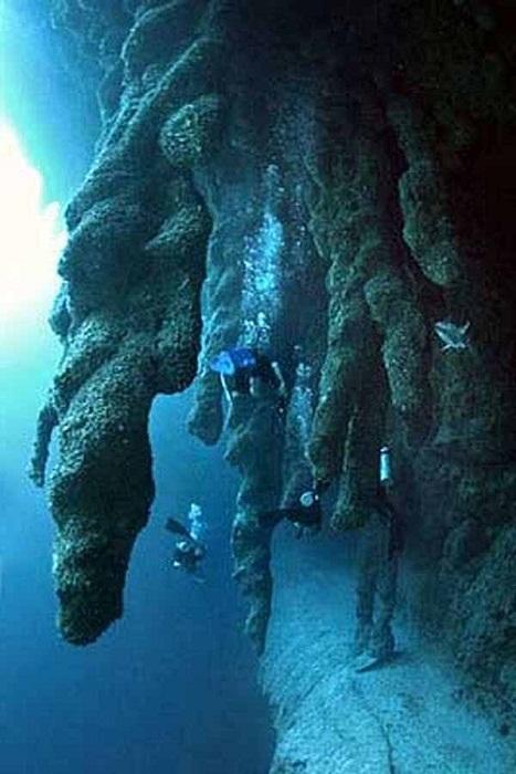 Морские сталактиты.