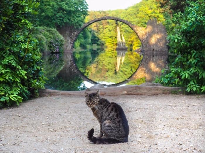Оптическая иллюзия, создаваемая конструкцией моста вызывает немало фантастических легенд и преданий (мост Ракотцбрюке, Германия). | Фото: mishka.travel.