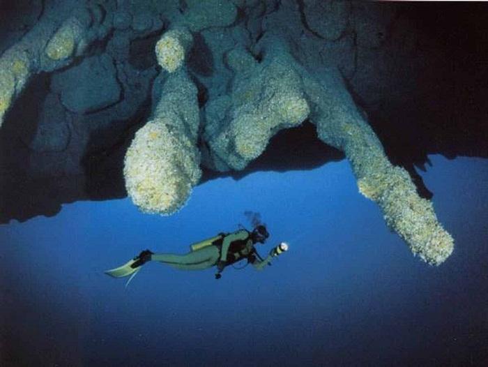 Неимоверный подводный пейзаж морских сталактитов.