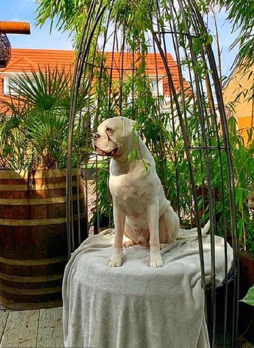 У собаки есть свое личное кресло. | Фото: dailymail.co.uk.