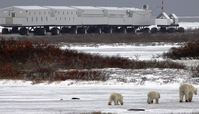 Отель состоит из нескольких огромных прицепов автопоезда (Tundra Lodge, Канада). | Фото: nashvancouver.com.