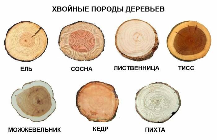 Так выглядят срезы хвойных деревьев, распространенных на территории России. | Фото: pikabu.ru.