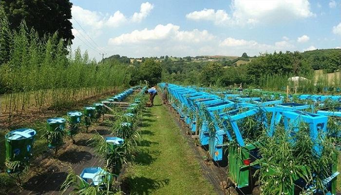 Ферма на которой выращивают живую мебель.