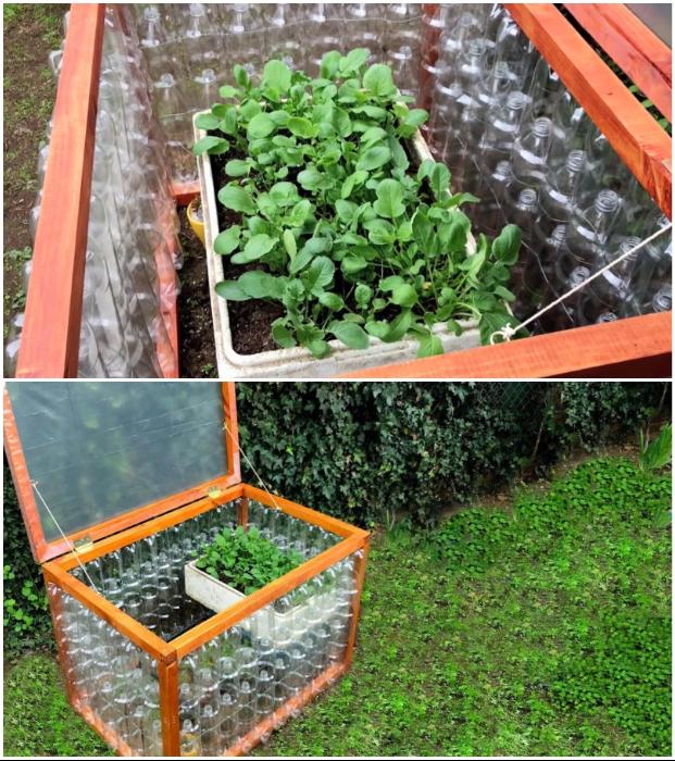 Осталось лишь посадить семена овощей и дождаться дружных всходов.