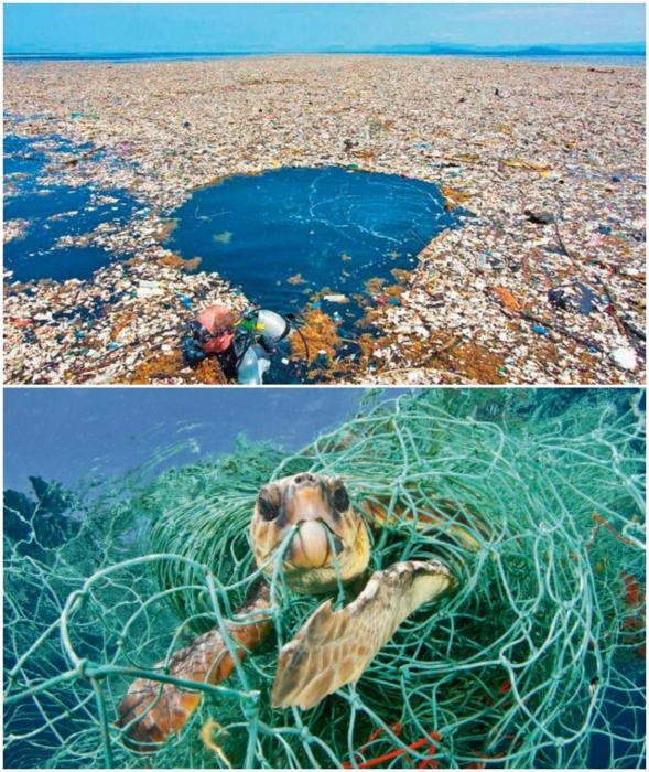 Бездумное хозяйствование человека может привести к грандиозной экологической катастрофе.